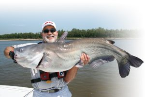 mississippi river catfish